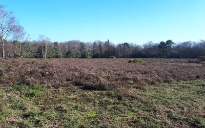 Heathland in Woking Borough