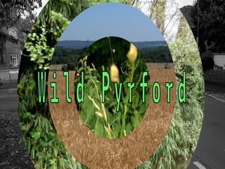 Wild Pyrford
