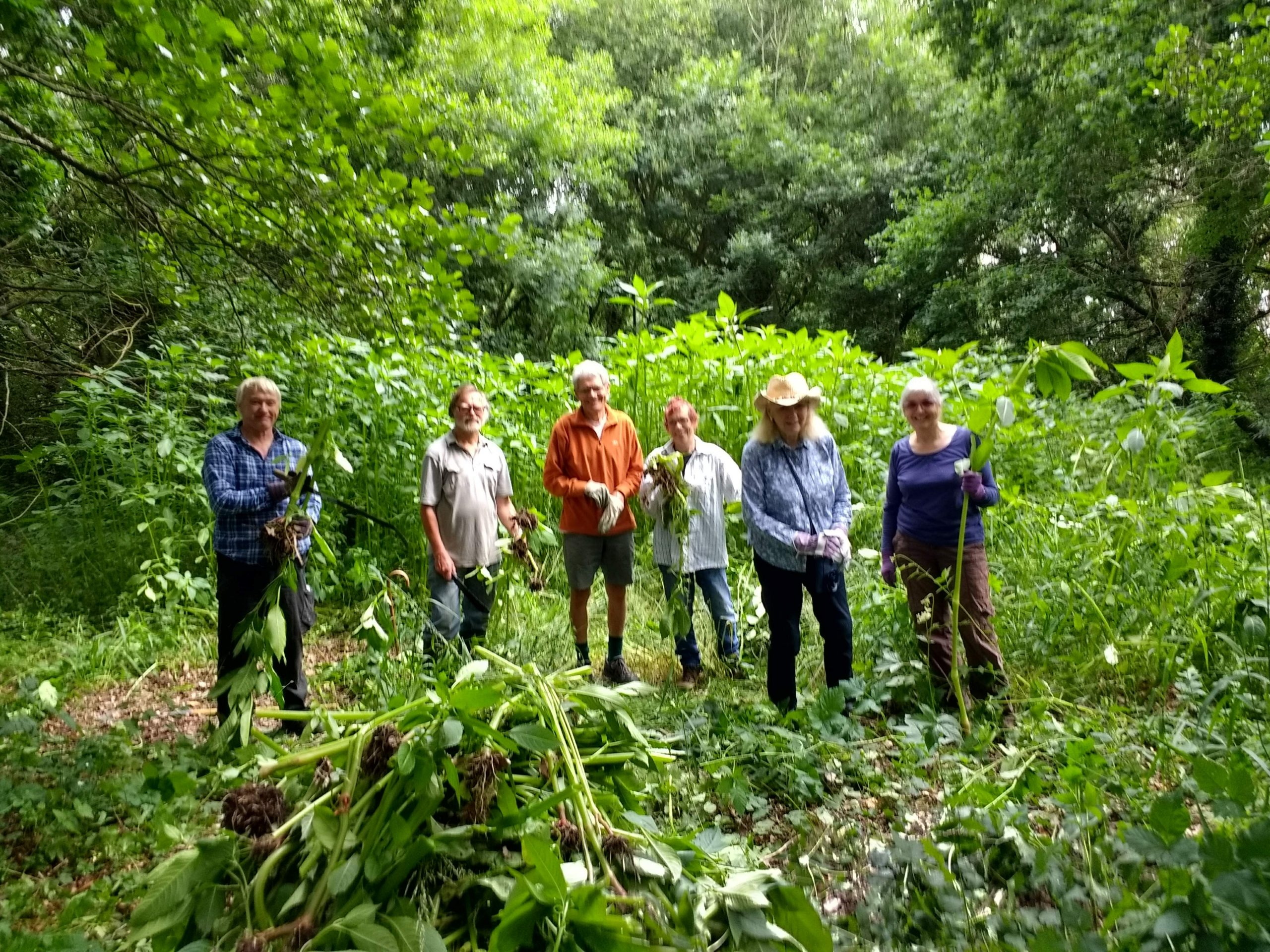 Woking Biodiversity Group – Himalayan Balsam